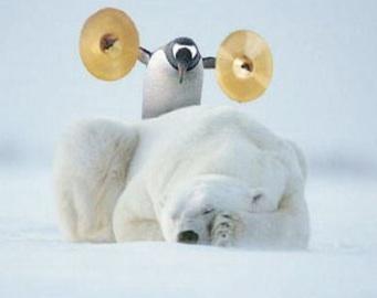 Show Me Penguin%20Cymbals%20%26%20Polarbear%20%20